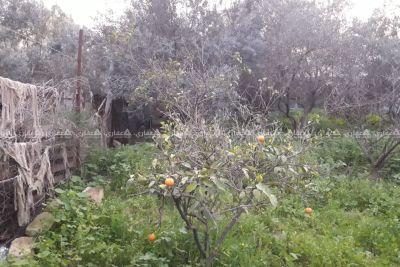 قطعه ارض في الزيتون مساحتها ٣٠٠متر