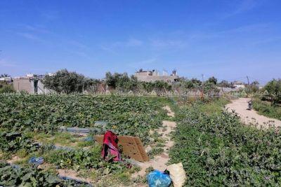 قطعه ارض ممتازه جدا شرق دير البلح