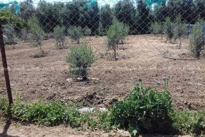 أرض طابو للبيع في جحر الديك