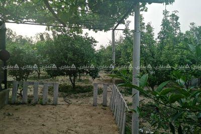 أرض مزروعة العديد من الاشجار وبها خطين مياة بلدية وبئر