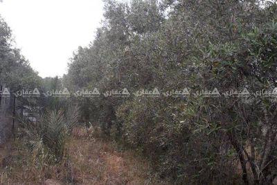 قطعه ارض للبيع شرق دير البلح