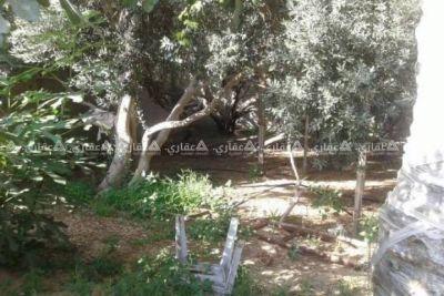 قطعة ارض مساحة 290 م الموقع ارض ابو مهادي