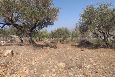ارض للبيع منطقة دير السودان