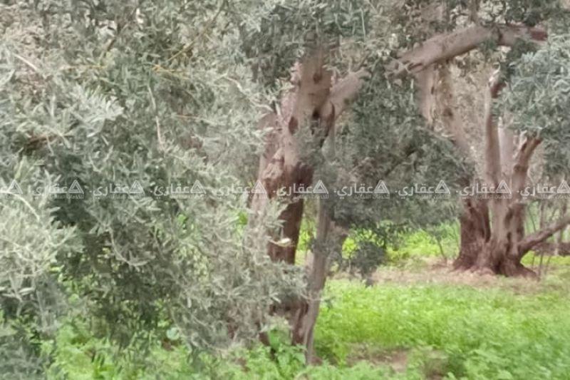 قطعة ارض للبدل على بيت في غزة او للبيع