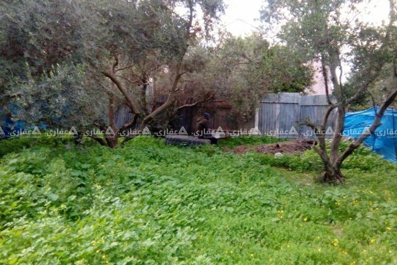 قطعة ارض بمساحة 269متر مشجرة زيتون وحمضيات