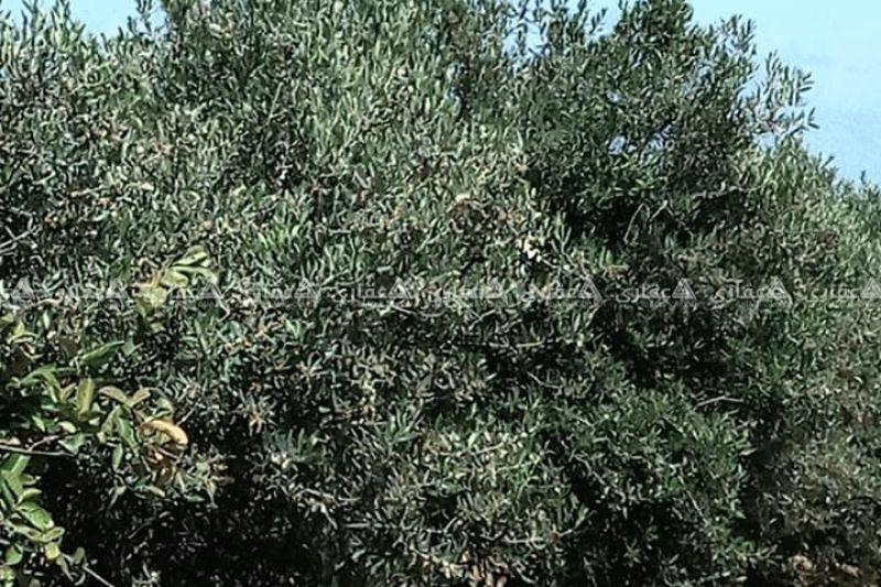 قطعة ارض طابو مساحة 1000متر في جحر الديك