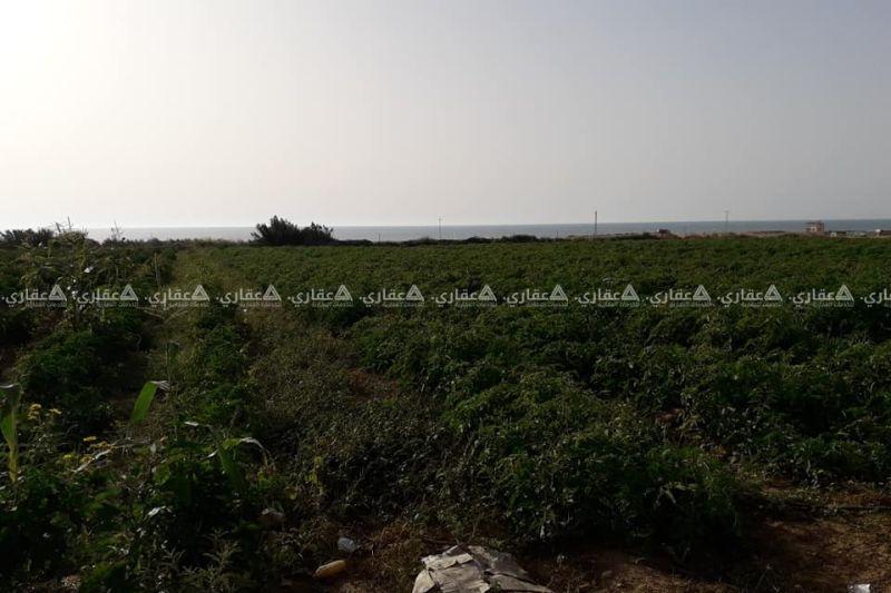 ارض للبيع السودانية بعد الواحة ٢٠٠ متر