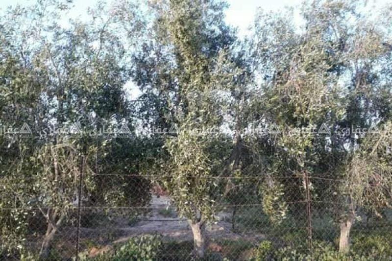 ارض للبيع طابو بيت حانون طابو