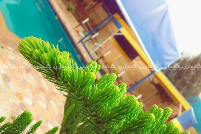 شاليه نجمة البحر
