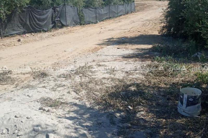 قطعة أرض مشجرة بالزيتون للبيع
