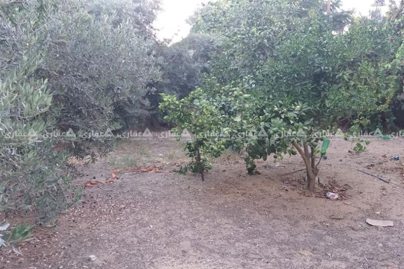 قطعة أرض قرب مسجد معاذ