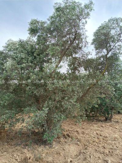 قطعة ارض مساحة 500متر شرق مخيم البريج