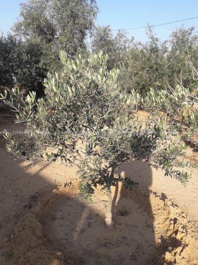 قطعة أرض للبيع في الفخاري
