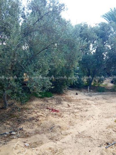 بياره مشجرة شجر مثمر للبيع